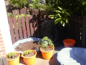 My 'Re-use' Garden