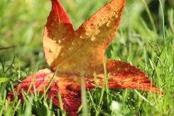 Rain on leaf 1